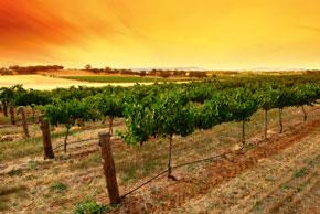 Weinanbau in der Toskana